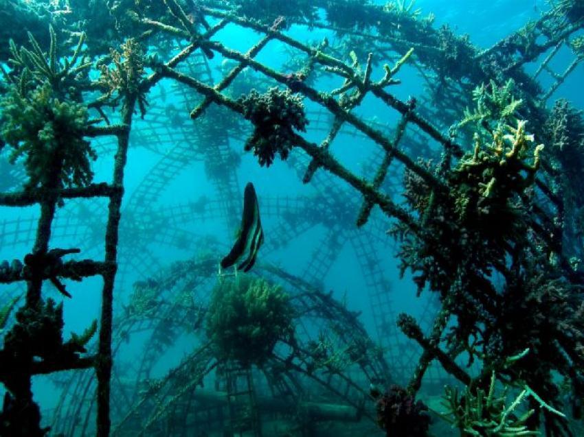 Pemuteran und Insel Menjangan, Menjangan,Indonesien,Korallenzuchtprojekt
