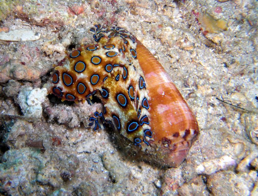 Unterwasserwelt von Bunaken