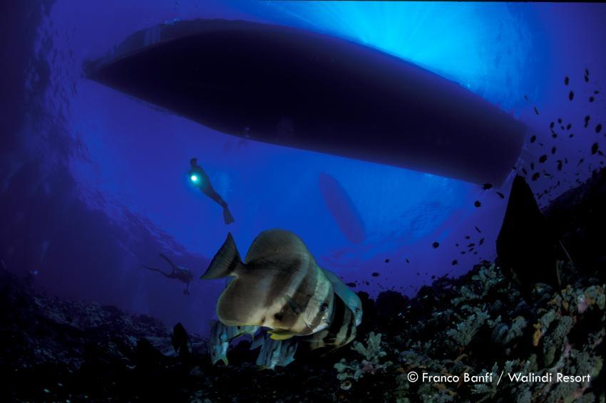 Kimbe Bay / Franco Banfi, Kimbe Bay, Papua-Neuguinea