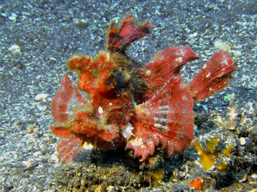 Joes Diving Bali - Die Tauchburg, Indonesien, Bali