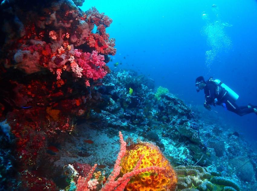 Korallenriff in Lembongan, Korallen, Riff, Korallenriff, tauchen, Indonesien, Bali, Blue Corner Dive, Lembongan