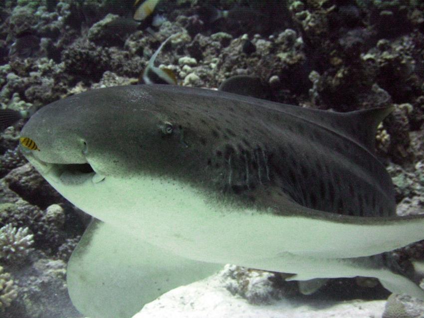 Siyul Kebira: Erst dachte ich, der Hai ist ein Gerücht