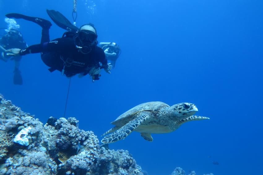 Scuba World Divers Hausriff Makadi Bay_5, Tauchen Ägypten Makadi Bay, Scuba World Divers Makadi Bay, Ägypten, Hurghada