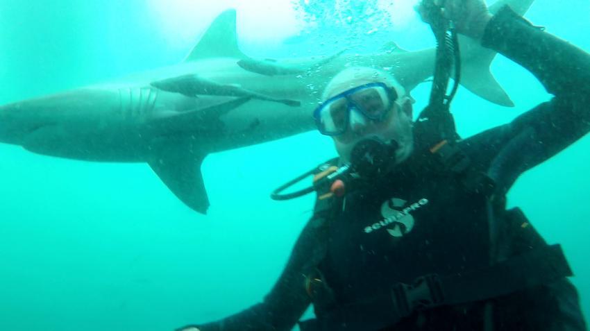 Selfi , Hai, Aliwal Dive Centre and Lodge, Umkomaas, Südafrika