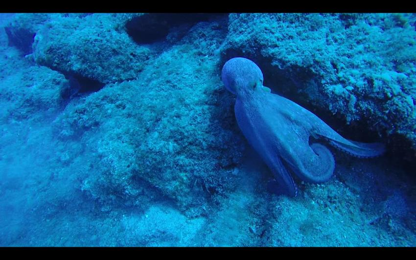 Atlantis, Rethymnon, Kreta, Griechenland