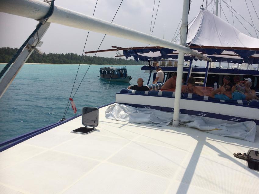 Hammerhead 2, Malediven
