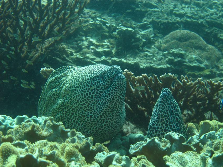 Extra Divers Al Sawadi, Oman