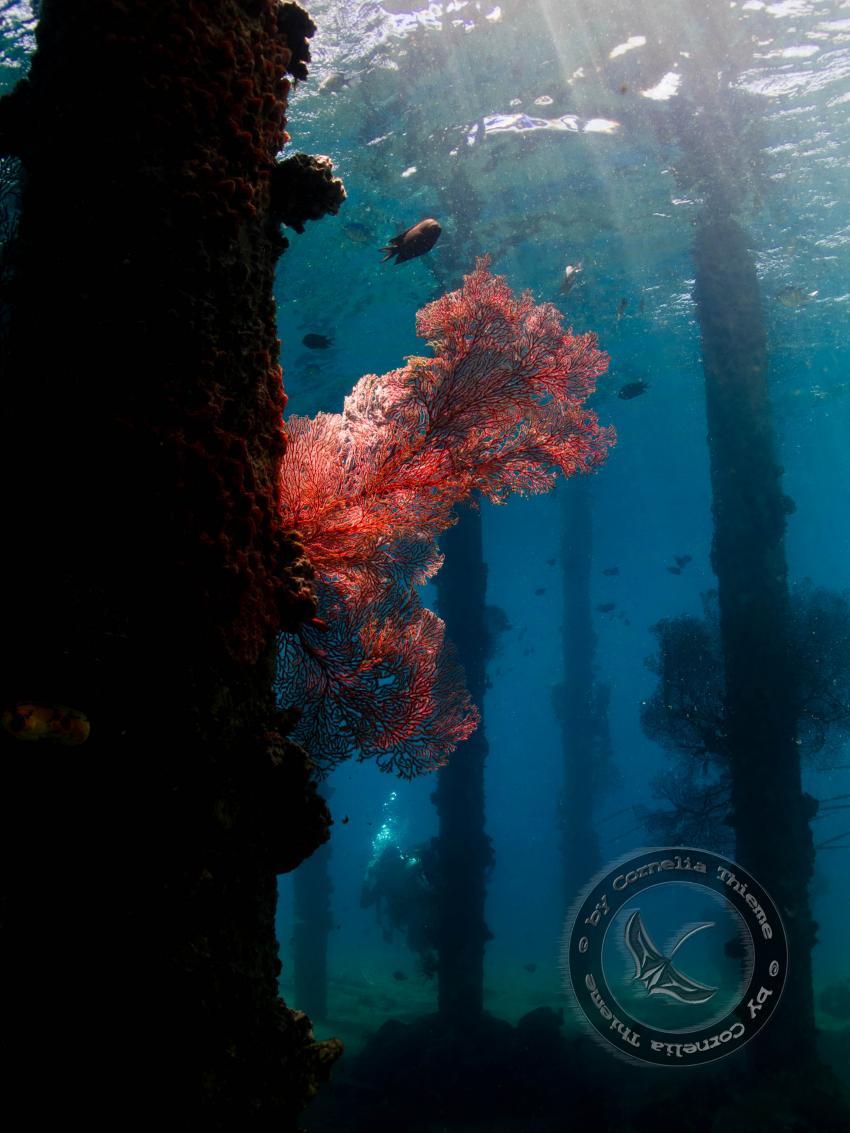 Blue Bay Divers 2010