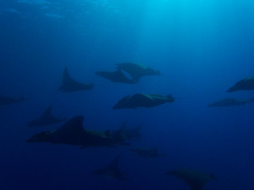 Wahoo Diving, Santa Maria, Azoren, Portugal