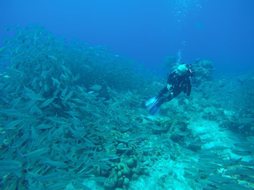 Unterwasser, ABC Travel Deutschland, Niederländische Antillen, Bonaire