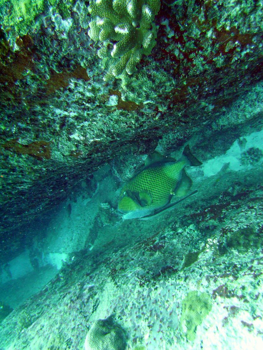 Mahé - Conception Island drift dive