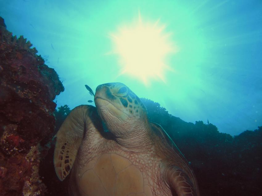 Sipadan, Sipadan,Malaysia,Schildkröte