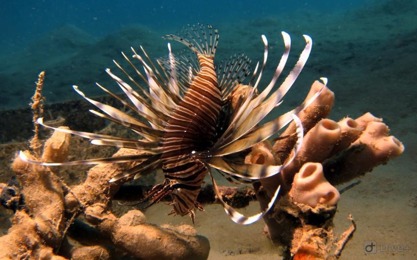 Extra Divers - Makadi Bay, Ägypten, Safaga