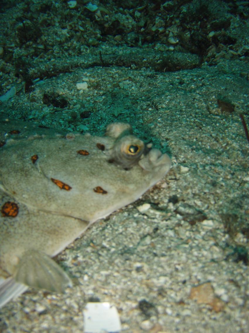 Kristiansund Vikaneset Diving, Kristiansund Vikaneset Diving,Norwegen