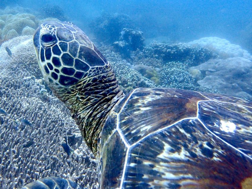 Dive Society El Dorado Beach Resort Dumaguete, Philippinen