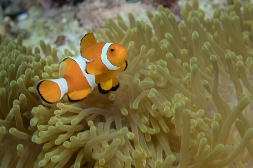 """Der obligatorische """"Nemo"""""""
