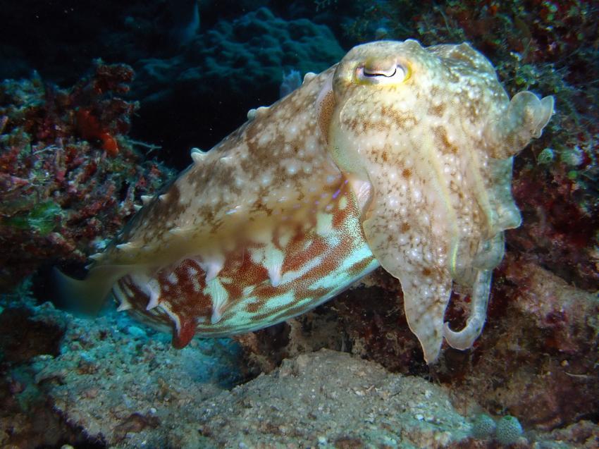 Aberratin Dive Club, Hausriff, Aberratin Dive Club,Hausriff,Philippinen,Sepia