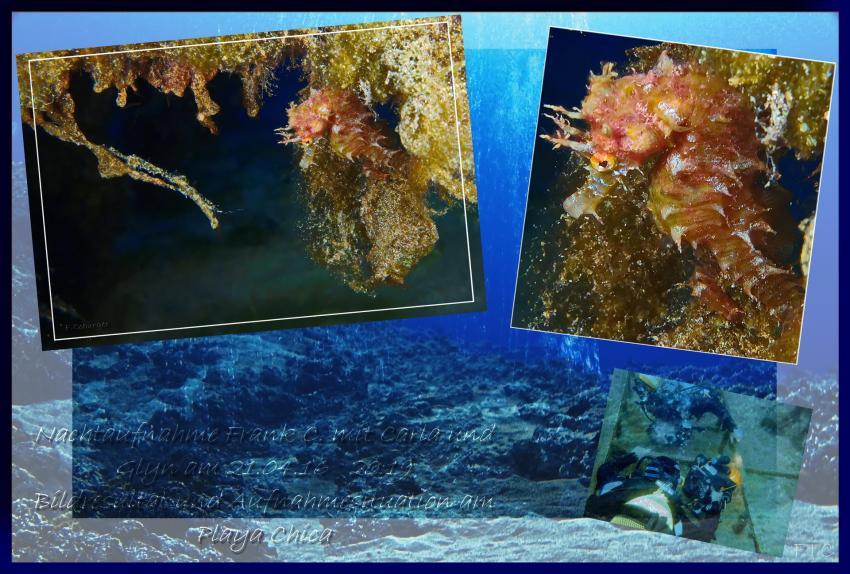 Die Zierlichkeit im Detail, TG mit Glyn und Carla, Daivoon Dive Center, Lanzarote, Costa Teguise, Spanien, Kanarische Inseln