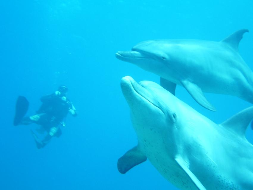 Marsa Shagra Safari, Marsa Shagra,Ägypten,Delphin,Delfin