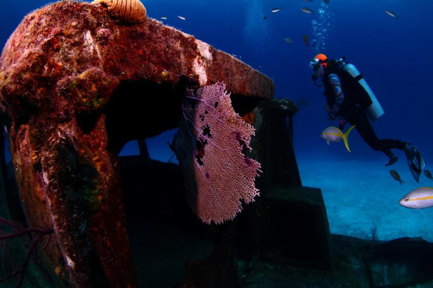 Fächerkoralle, Wrack, Reef Oasis Viva Bahamas, Grand Bahama, Bahamas