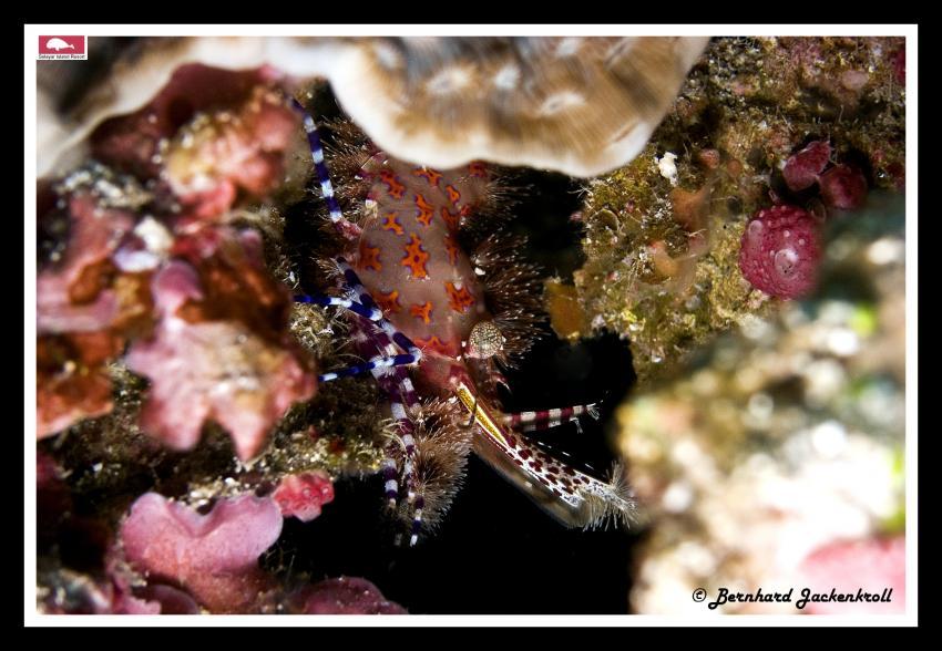 Bilder aus Selayar, Sued Sulawesi,Selayar,Indonesien