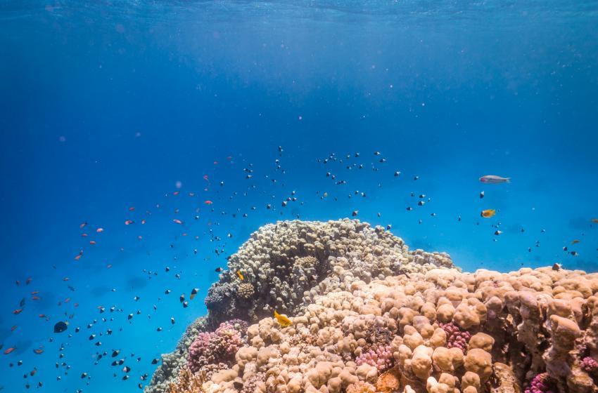 Scuba World Divers Soma Bay_7, Tauchen in der Soma Bay, Scuba World Divers Soma Bay, Caribbean World Resort, Ägypten, Safaga