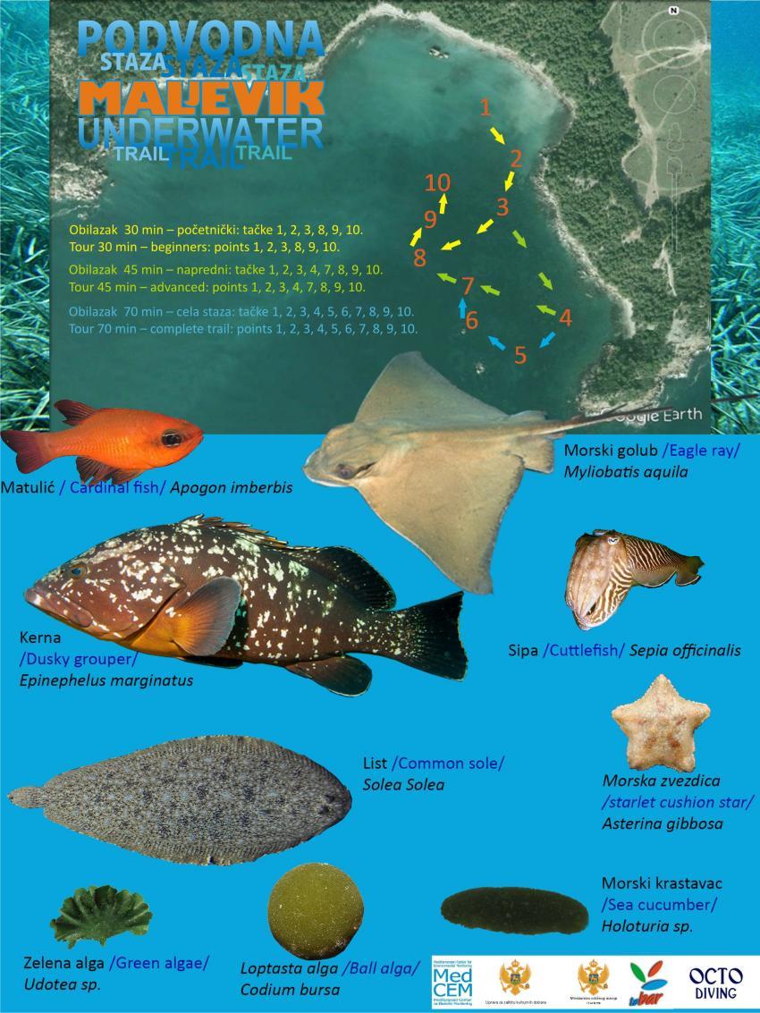 fish cart whit scuba park map , Maljevik octo snorkel dive park , Serbien und Montenegro