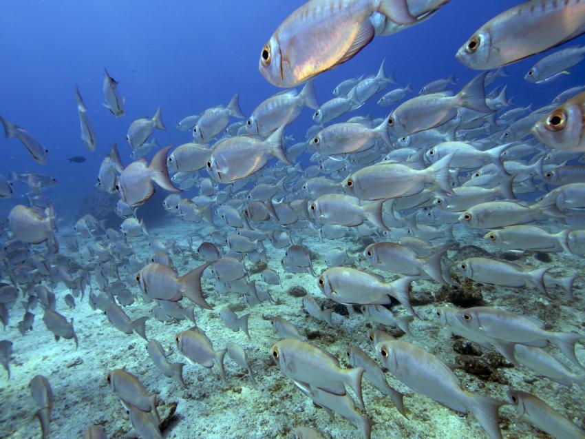 Seychellen Tauchsafari auf der Sea Pearl, SV Sea Pearl, Seychellen
