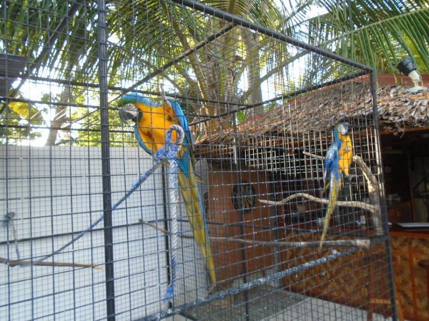 Aras, Parrot Resort Moalboal, Philippinen