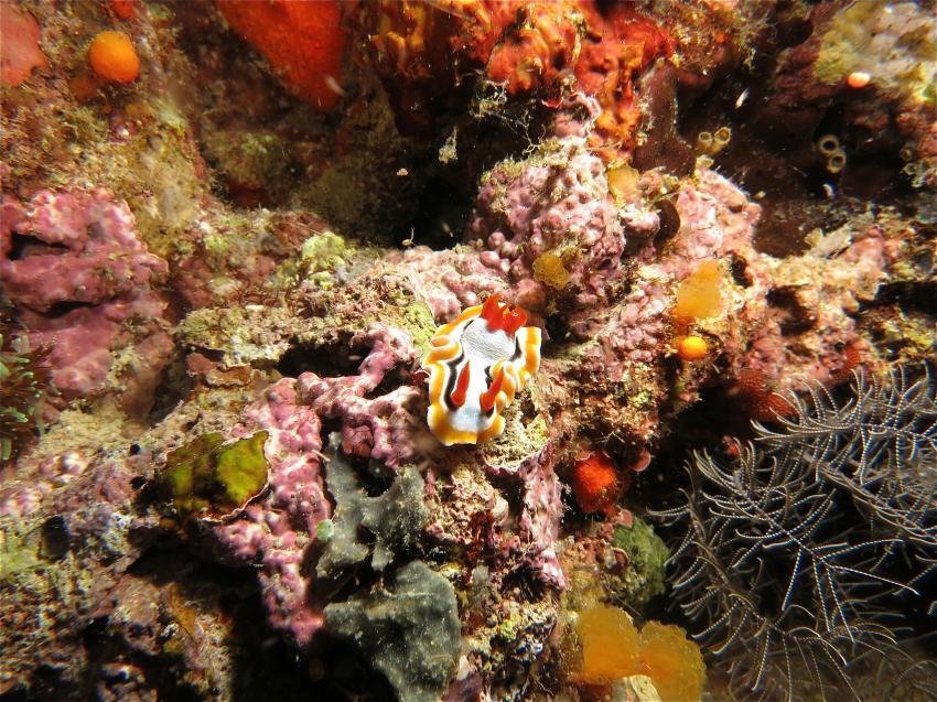 Labuanbajo -Ambon, Arenui, Labuanbajo -Ambon,Arenui,Indonesien