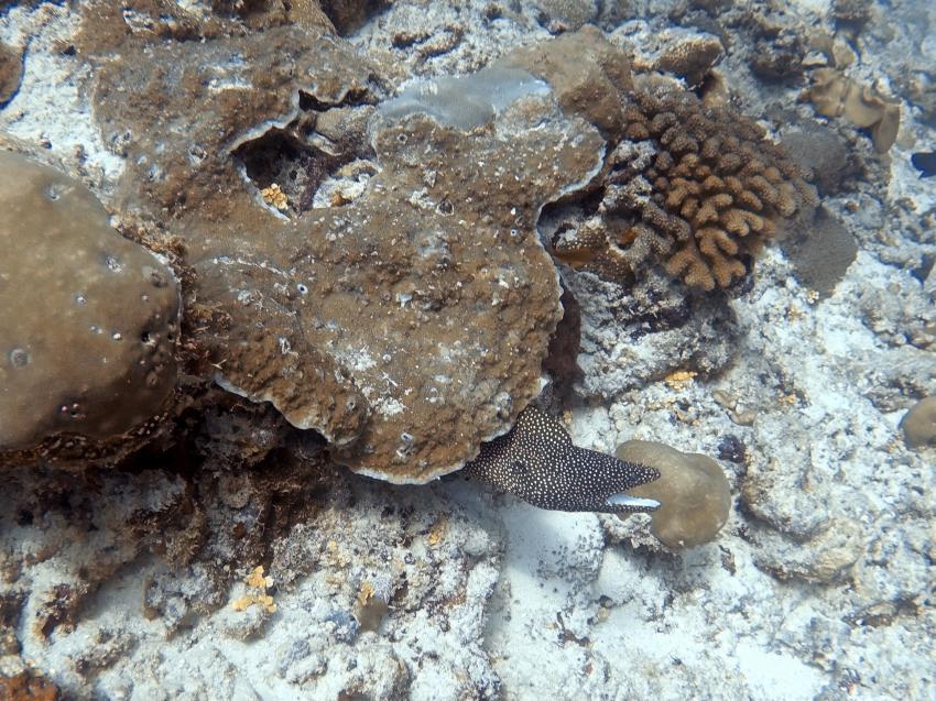 Angaga, SUB AQUA DiveCenter, Malediven