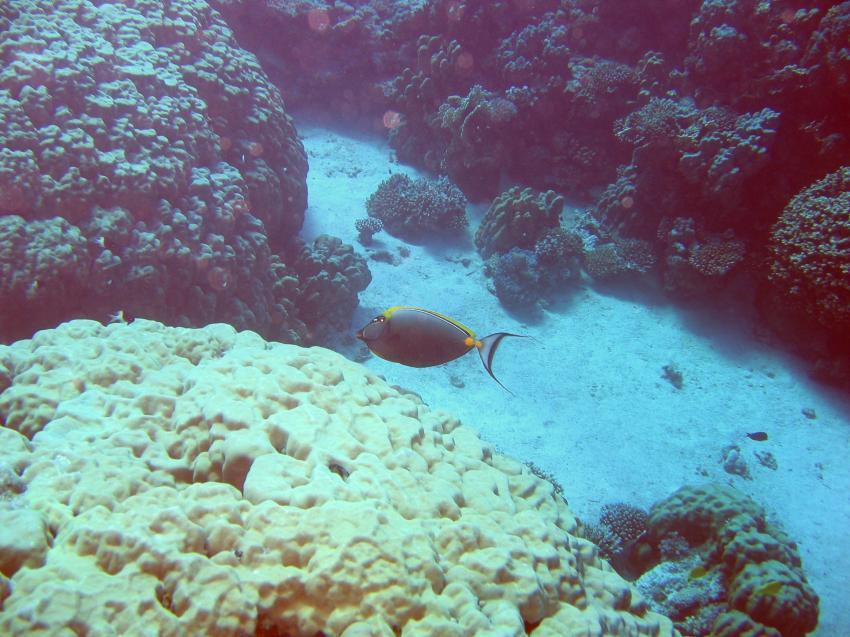Hurghada - Marsa Abu Galawa, Marsa Abu Galawa,Hurghada,Ägypten
