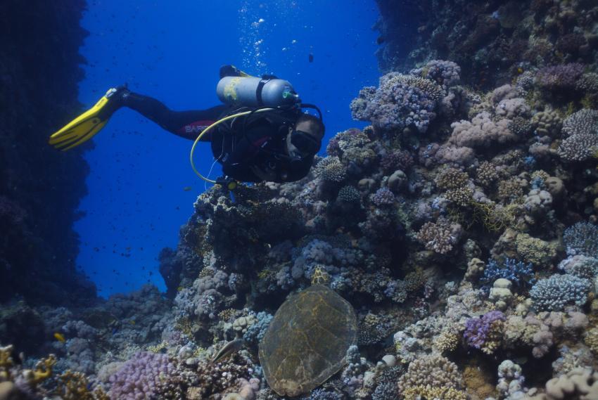 Begegnung, Ilios Dive Club & Aqua Center, Hurghada, Ägypten, Hurghada