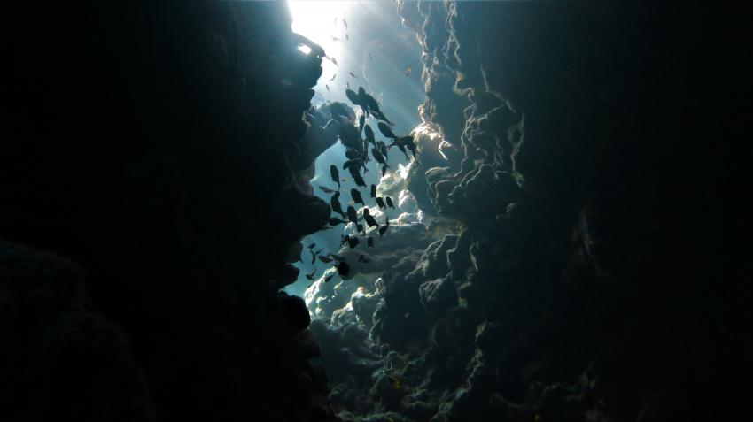 INMO-Divers, Dahab, Ägypten, Sinai-Nord ab Dahab