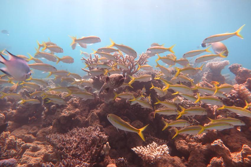 Scuba World Divers Makadi Bay_Hausriff_4, Tauchen in der Makadi Bay, Scuba World Divers Makadi Bay, Ägypten, Hurghada