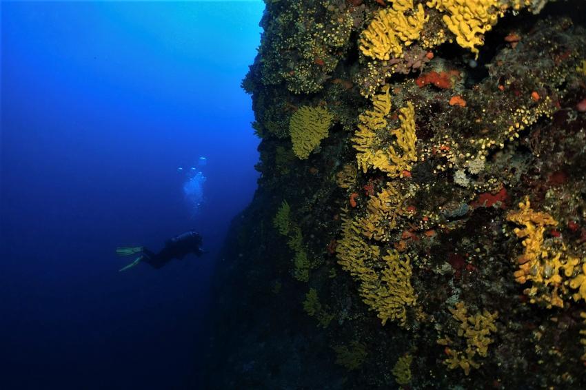 Steilwand, Mittelmeer, Korallen, Najada diving, Murter, Kroatien