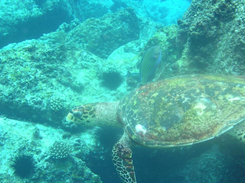 Praslin, Praslin,Seychellen