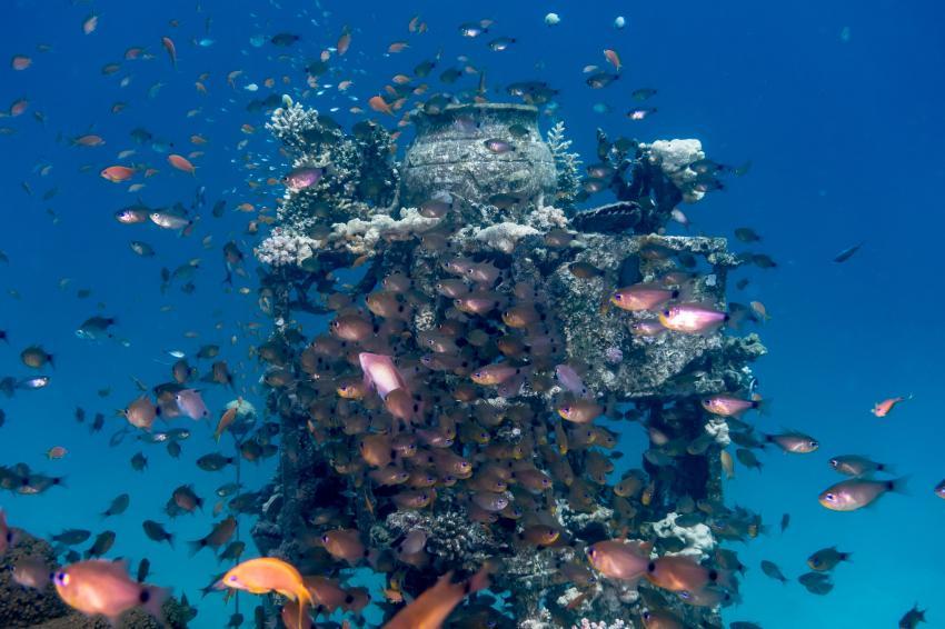 SWD_Hausriff_Madinat Makadi_2, Tauchen Ägypten Makadi Bay, Scuba World Divers Makadi Bay, Ägypten, Hurghada