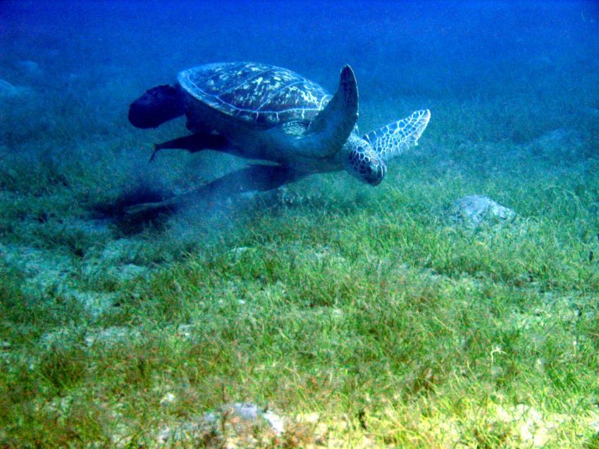 El Quseir - Dugong Beach, Dugong Beach,El Quseir,Ägypten