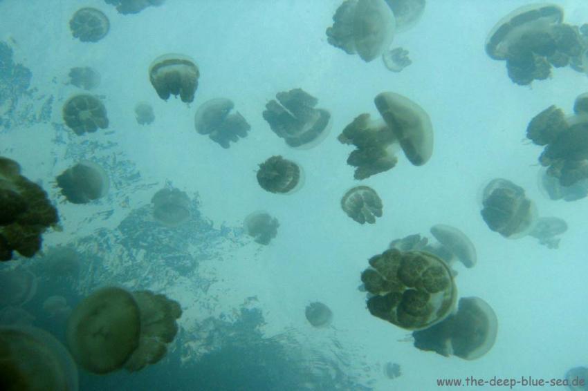 Nabucco Island, Nabucco Island,Indonesien