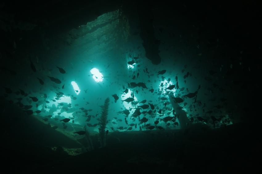 Dive for you, Hikkaduwa, Sri Lanka