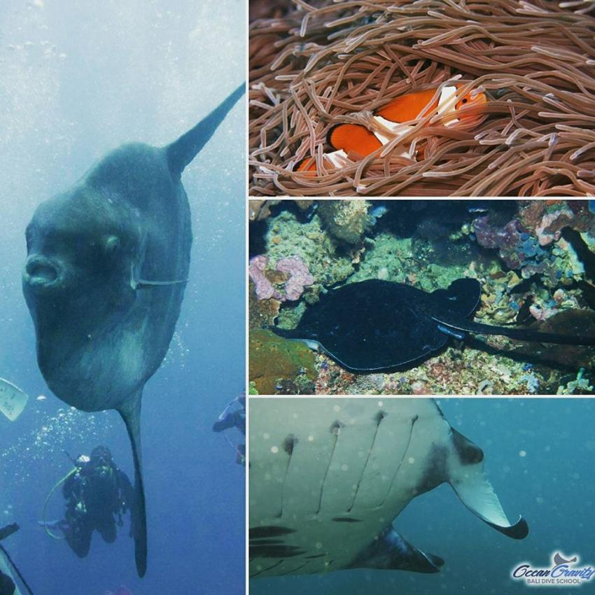 Ocean Gravity Bali Dive School, Indonesien, Bali