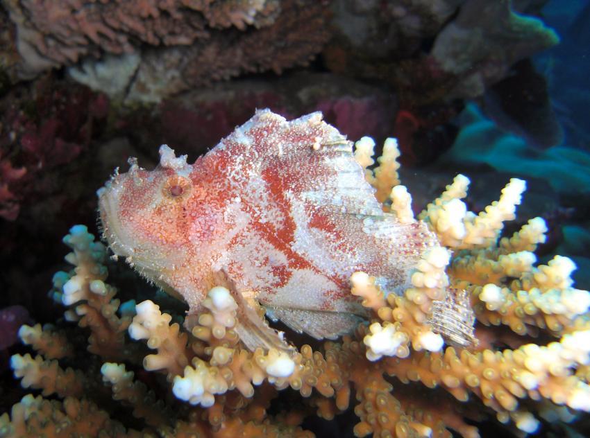 unter wasser im addu atoll