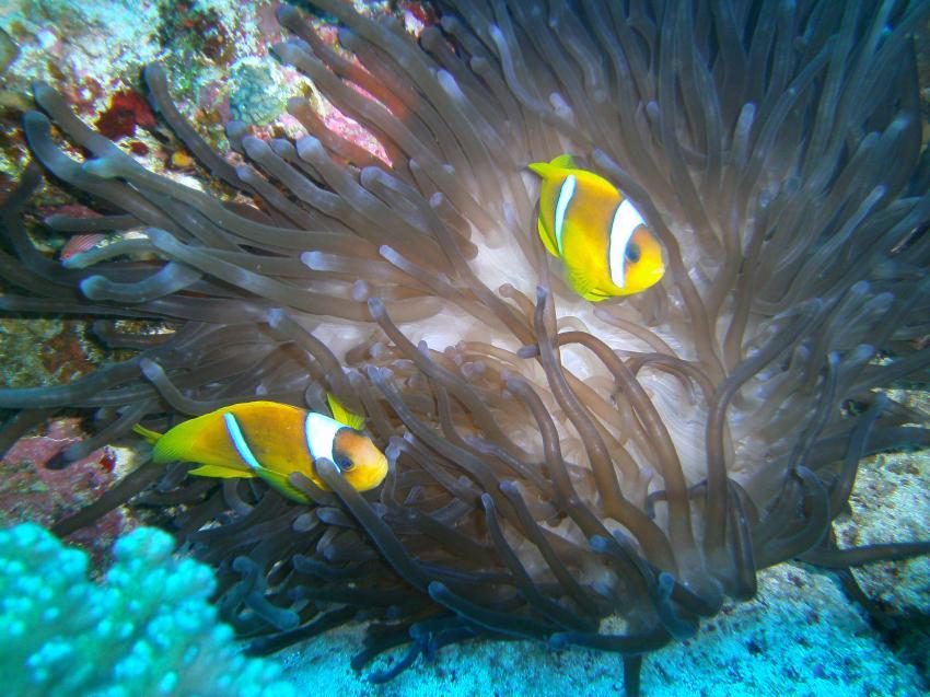 ORCA Dive Club Moreen Beach, Ägypten, Marsa Alam und südlich
