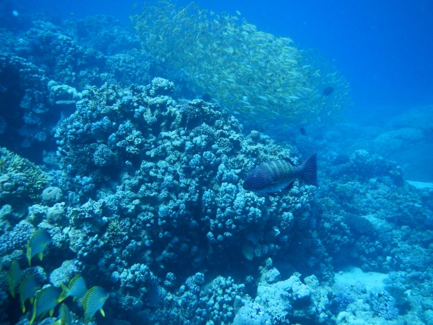Schnupper tauchen in Hurghada, Pro Scuba Diving (ex Cupidon DC),Dana Beach Resort,Hurghada,Ägypten