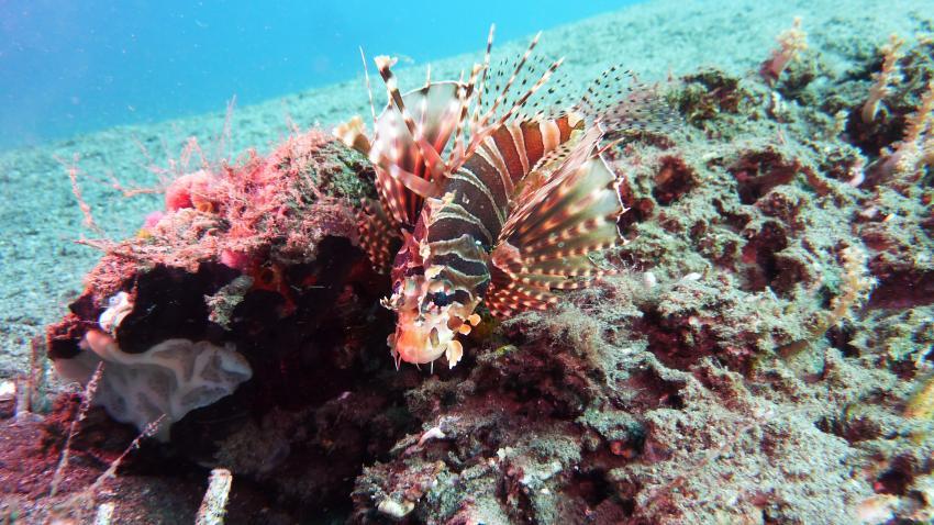 Dive Hub, Dive-Philippinen,Philippinen