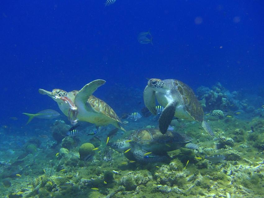 kann das nur Stress geben, Bahia Apartments & Diving, Lagun, Niederländische Antillen, Curaçao