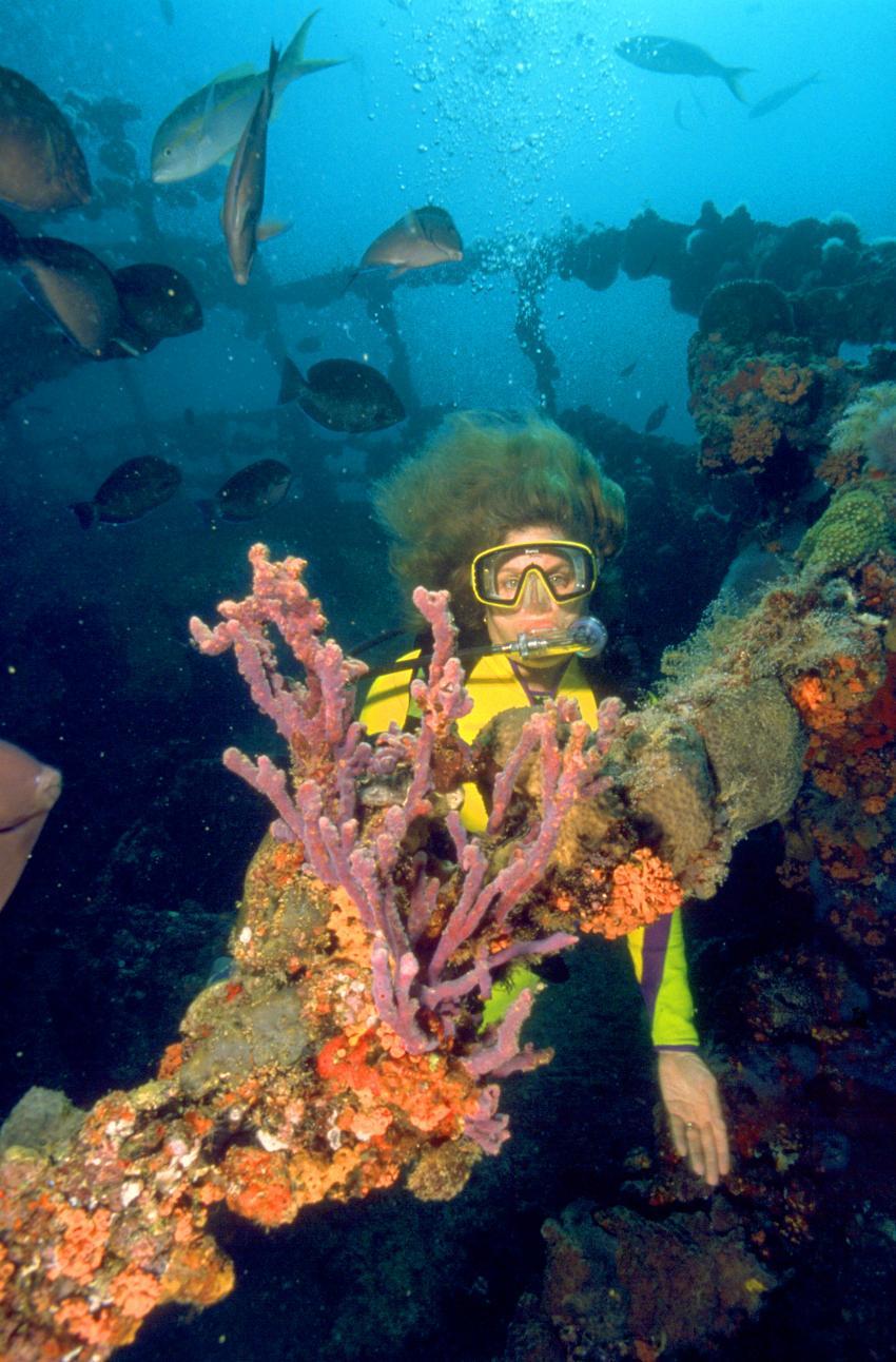 Tauchen am Wrack der Antilla © Aruba Tourism Authority, Antilla Wrack, Niederländische Antillen, Aruba