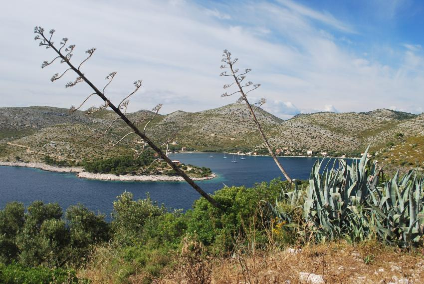 Insel Lastovo, Insel Lastovo,Kroatien,Landschaft,grün,traumhaft,entspannen,Küste