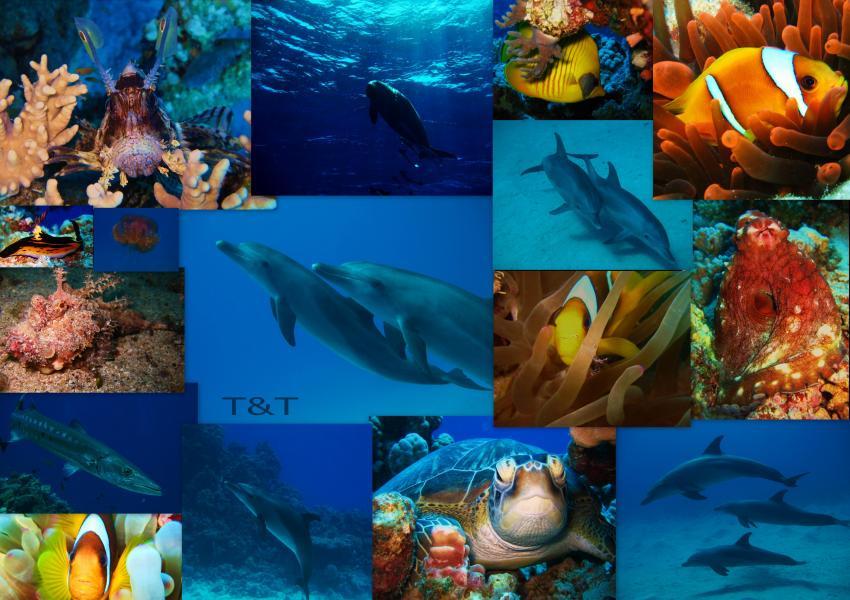 Marsa Alam Diving Ocean, Marsa Alam Diving Ocean,Ägypten